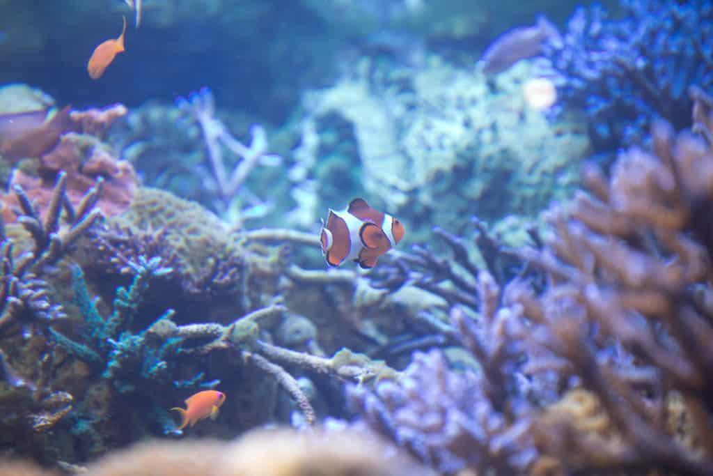 ที่เที่ยวมิเอะ (Mie) : พิพิธภัณฑ์สัตว์น้ำโทบะ (Toba Aquarium)