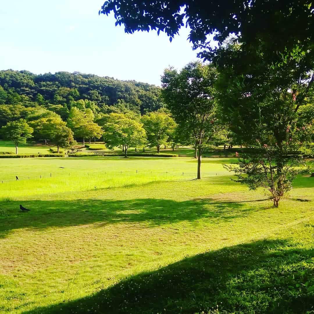 สนามหญ้าฮิคาริโตะคาเซ (Hikari to Kaze no Hiroba)