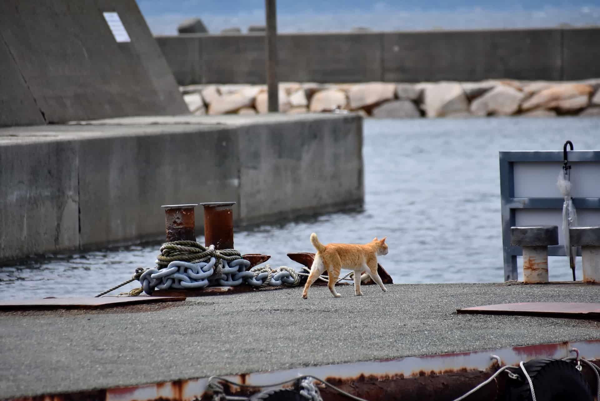 เกาะแมวที่ญี่ปุ่น : เกาะอาโอชิมะ จังหวัดเอฮิเมะ