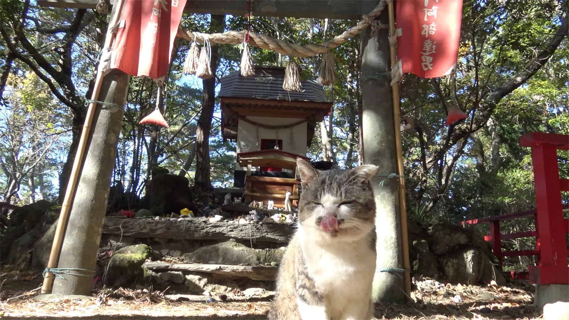 สถานที่ที่มี แมว ใน ญี่ปุ่น