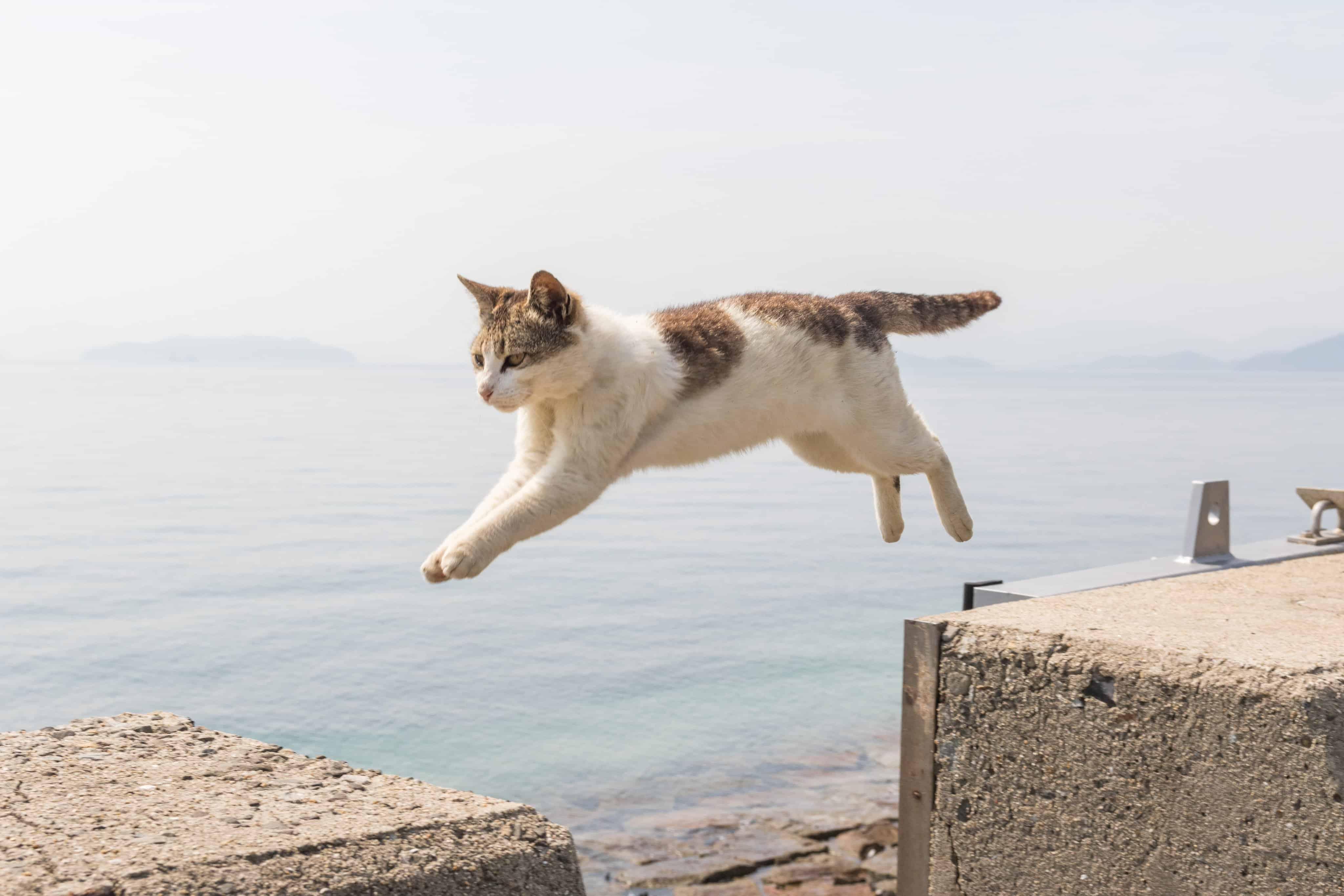 เกาะ แมว ญี่ปุ่น : เกาะซานากิจิมะ จังหวัดคางาวะ (Sanagijima, Kagawa)