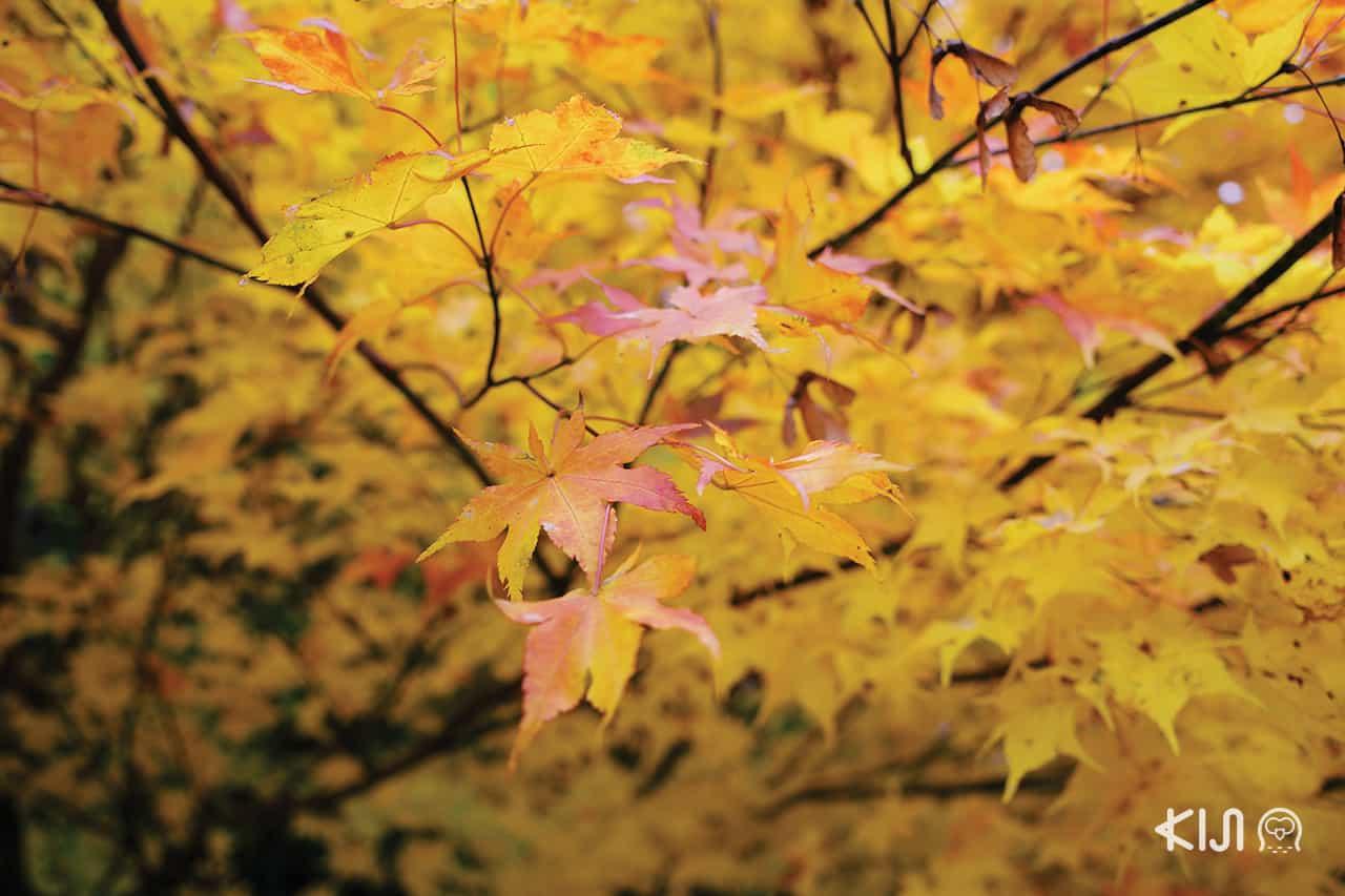 นิวโตออนเซ็น ฤดูใบไม้เปลี่ยนสี