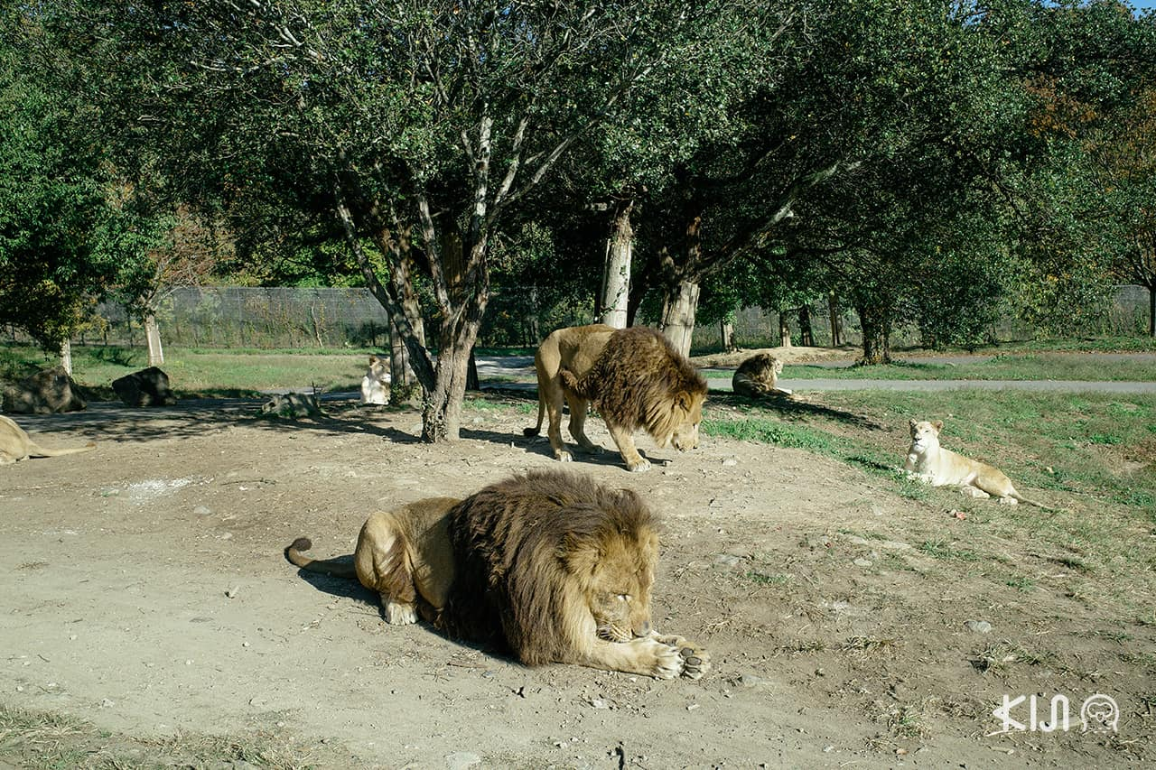 โซน Safari Park ใน Himeji Central Park