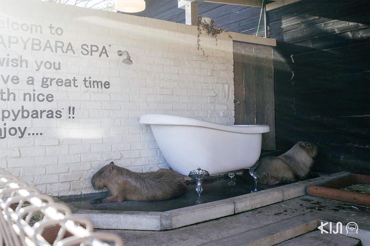 Capybara Garden , Hyogo