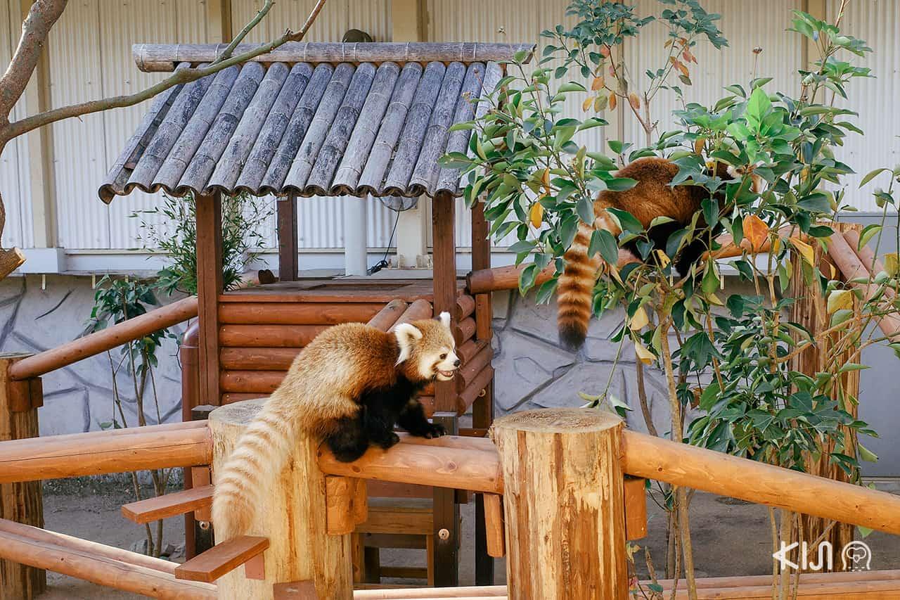สัตว์น้อยน่ารักที่ Himeji Central Park