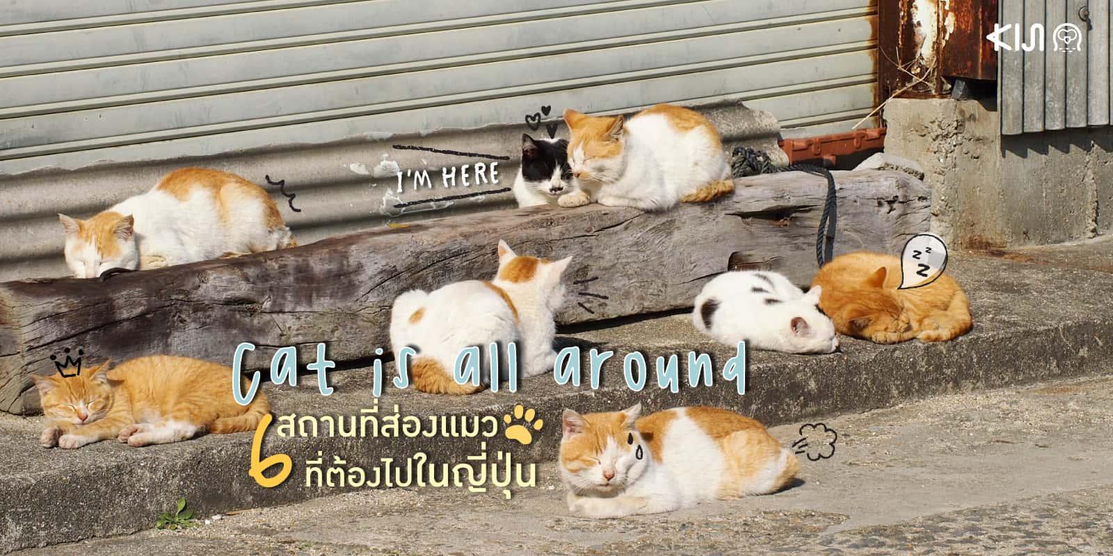 เกาะ แมว ใน ญี่ปุ่น (Cat island in Japan)