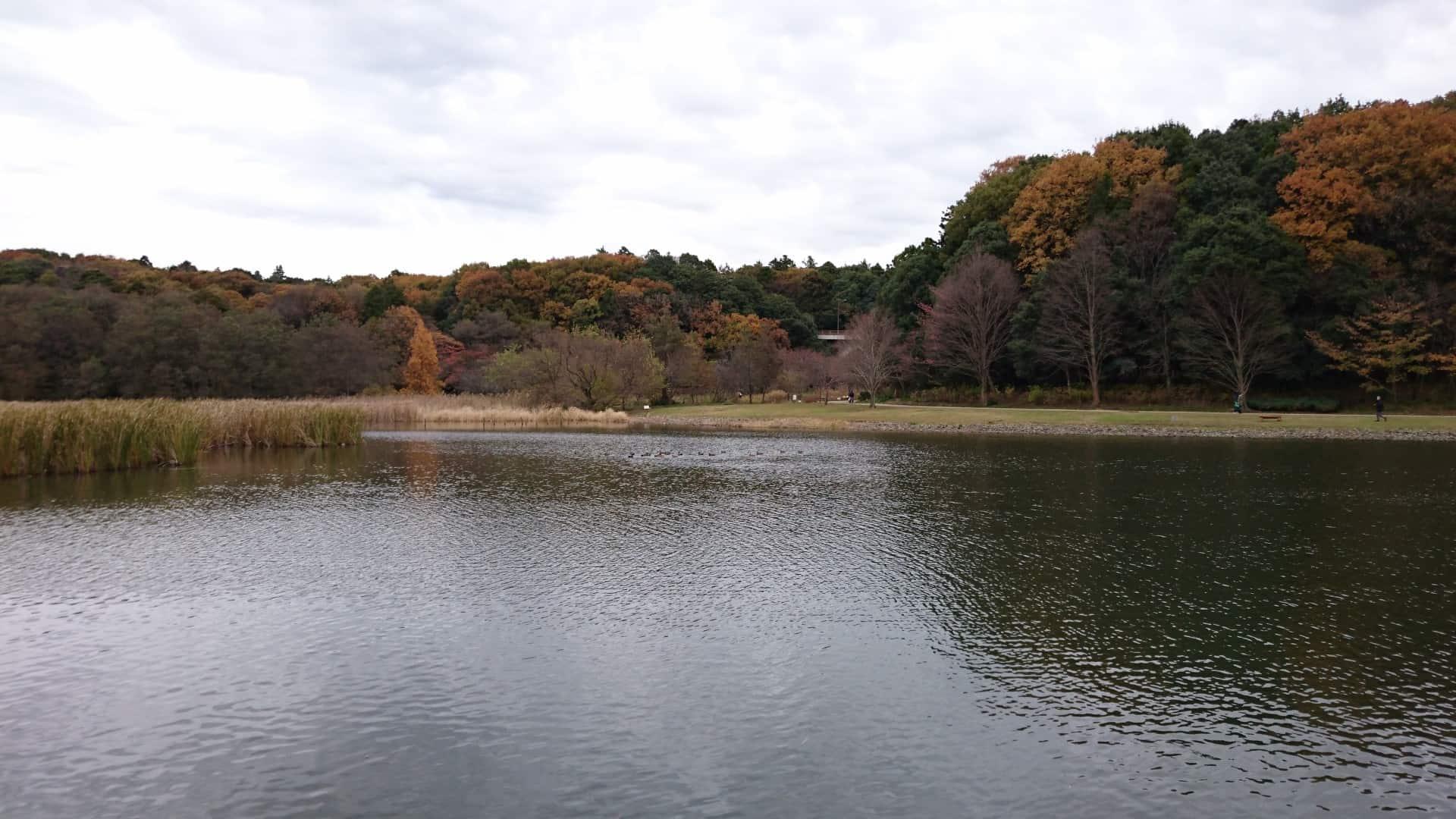 สระเซ็นดาโบริ (Sendabori Pond)