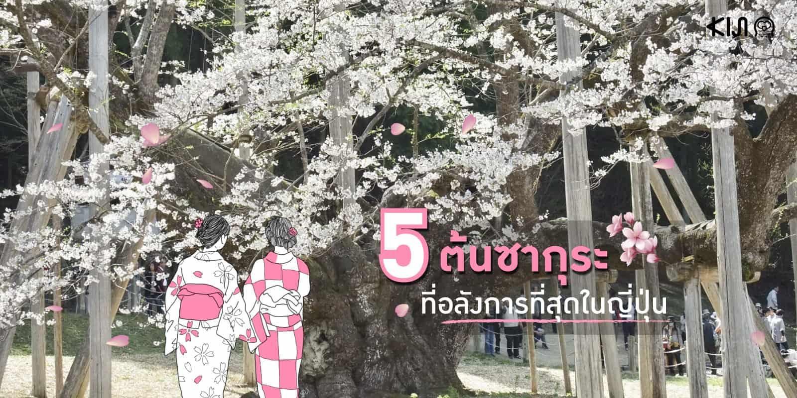 """5 """"ซากุระ"""" ที่อลังการและควรไปเช็คอินที่สุดใน """"ญี่ปุ่น"""""""