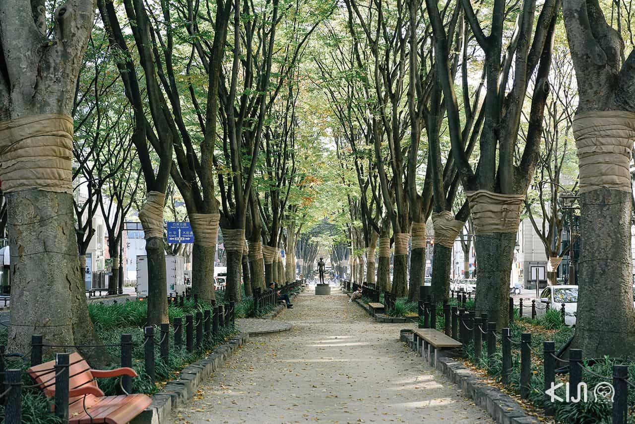 Jozenji-dori Green Park ถนนใจกลางเมือง Sendai