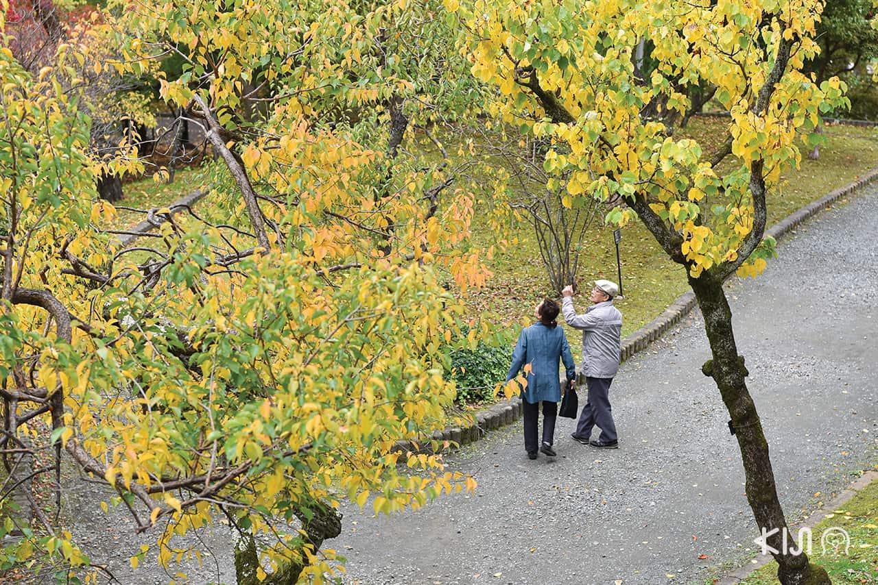 Morioka Castle Site Park ที่คนนิยมเดินทางมาในฤดูใบไม้ร่วง