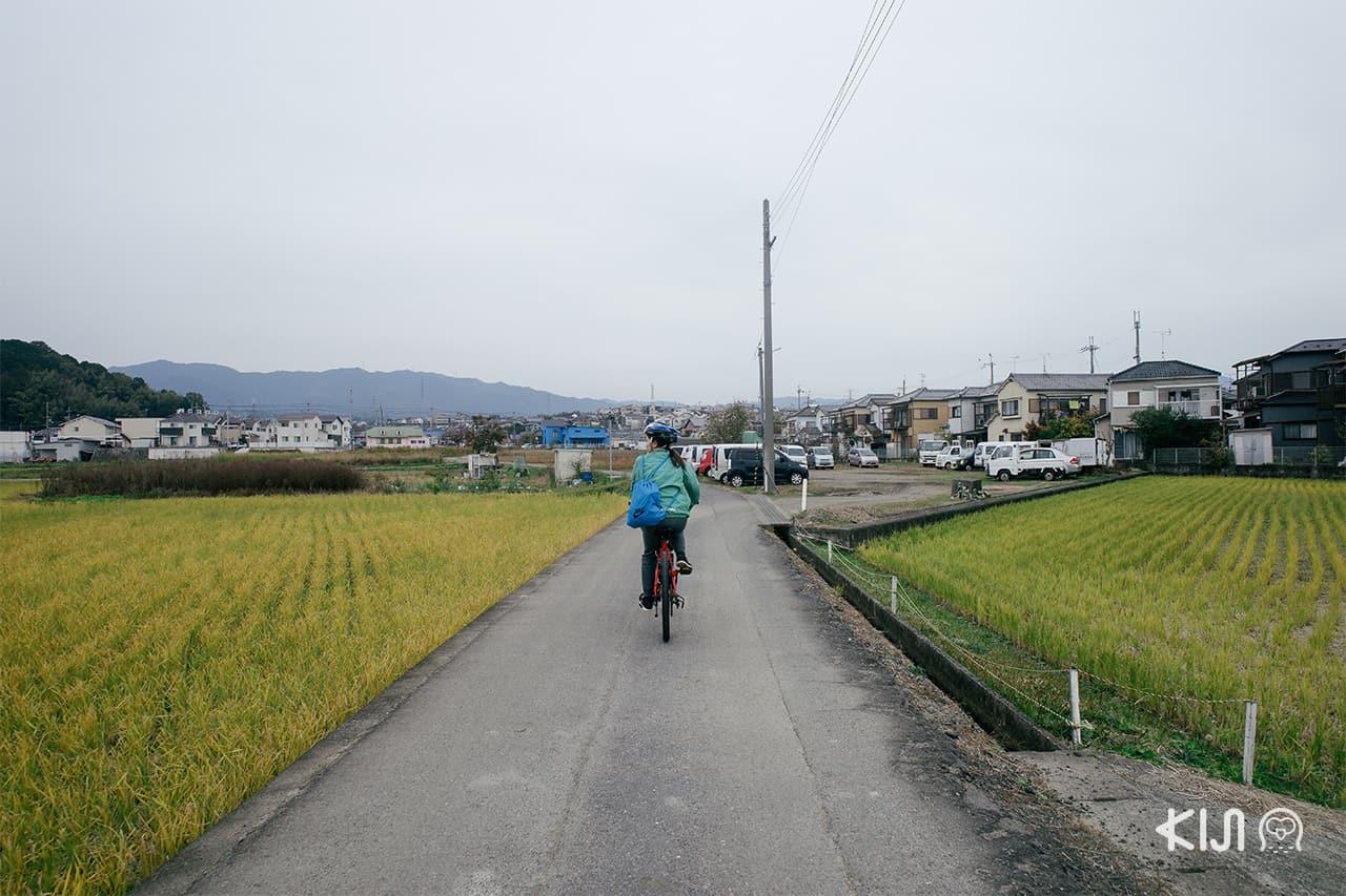 กิจกรรมปั่นจักรยานชมวิวทิวทัศน์รอบเมืองโอตสึ (Otsu)