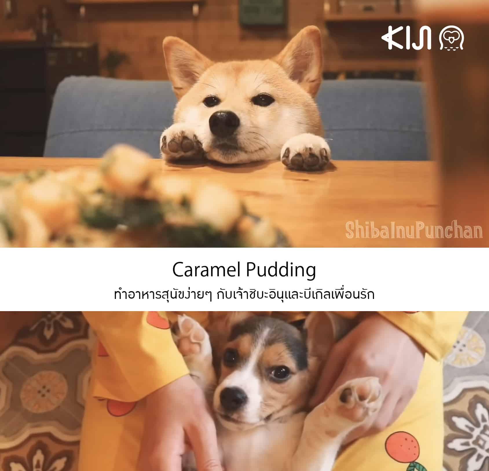 Caramel Pudding ยูทูปเบอร์ญี่ปุุ่น ที่มีความสุขกับการทำอาหารสุนัขง่ายๆ ให้เจ้าชิบะอินุและบีเกิลเพื่อนรัก