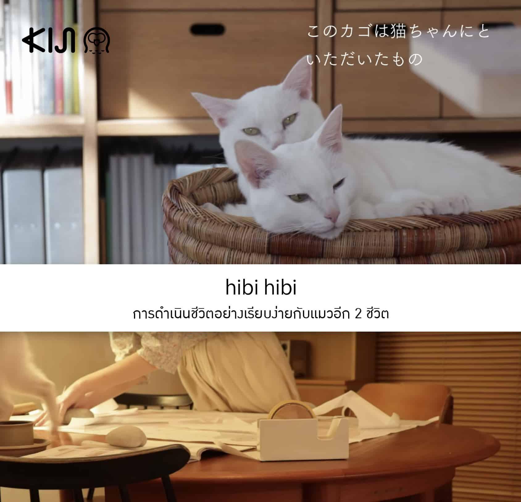 hibi hibi ยูทูปเบอร์ญี่ปุ่น ที่นำเสนอการดำเนินชีวิตอย่างเรียบง่ายกับแมวอีก 2 ชีวิต
