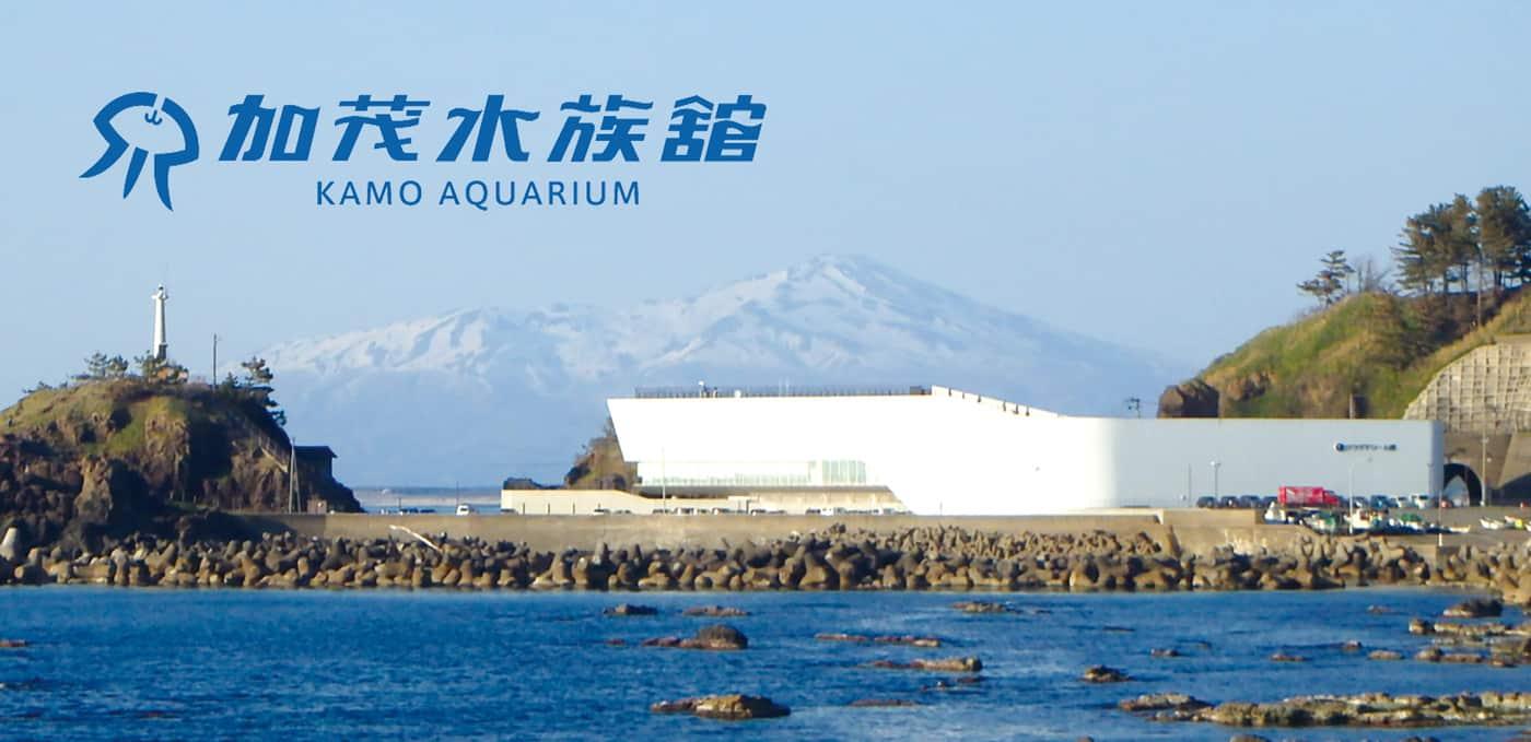 Kamo Aquarium เป็นที่รู้จักกันดีกันในนาม Dream House of Jellies ในยามากาตะ
