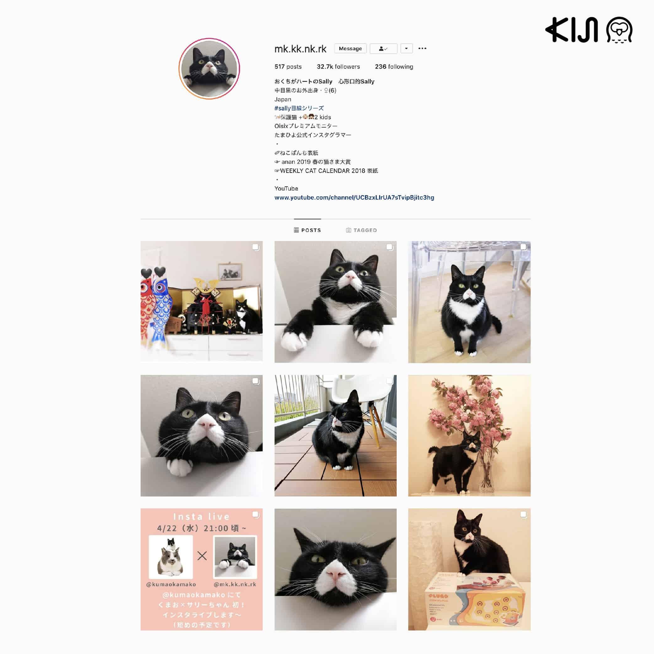 แมวญี่ปุ่น สีดำตัวดังที่มีจุดเด่นคือจมูกสีขาวรูปหัวใจคว่ำ