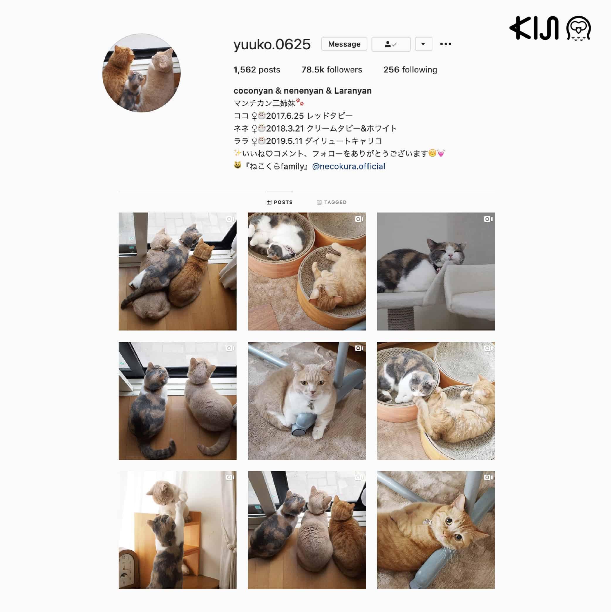 Coco, Nene และ Lara เป็นแก๊ง แมวญี่ปุ่น สามใบเถา เจ้าของชอบถ่ายชีวิตประจำวันสนุกๆ ให้ดูอยู่เป็นประจำ