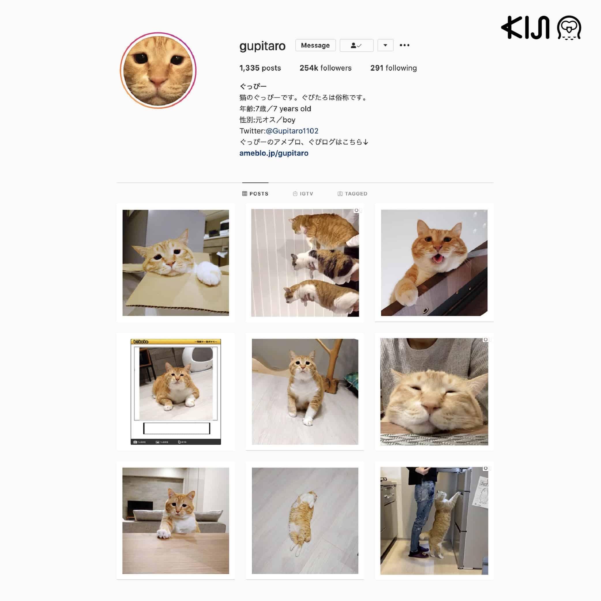 Gupitaro แมวตาละห้อยซึ่งเป็นที่รู้จักในหมู่ ทาสแมวญี่ปุ่น