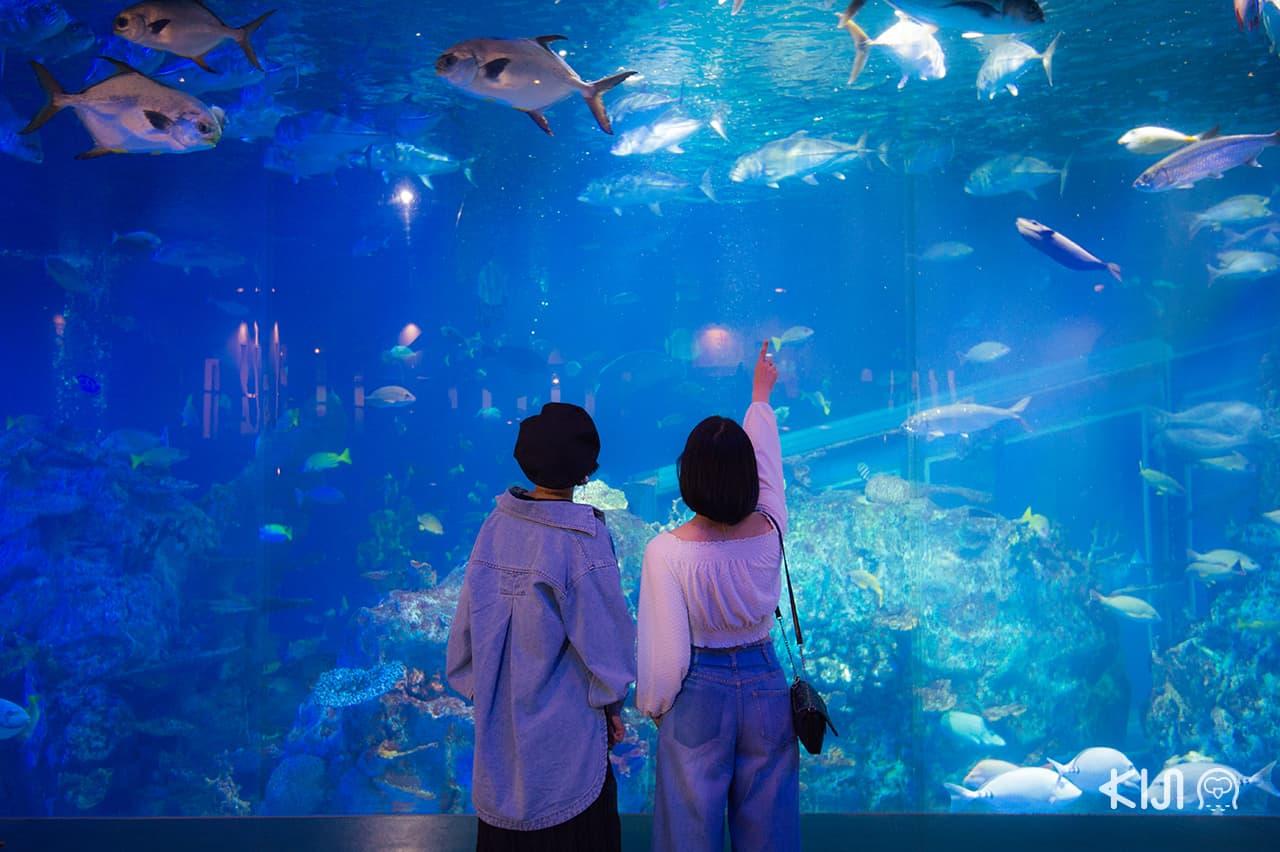 เที่ยว มิเอะ : Toba Aquarium