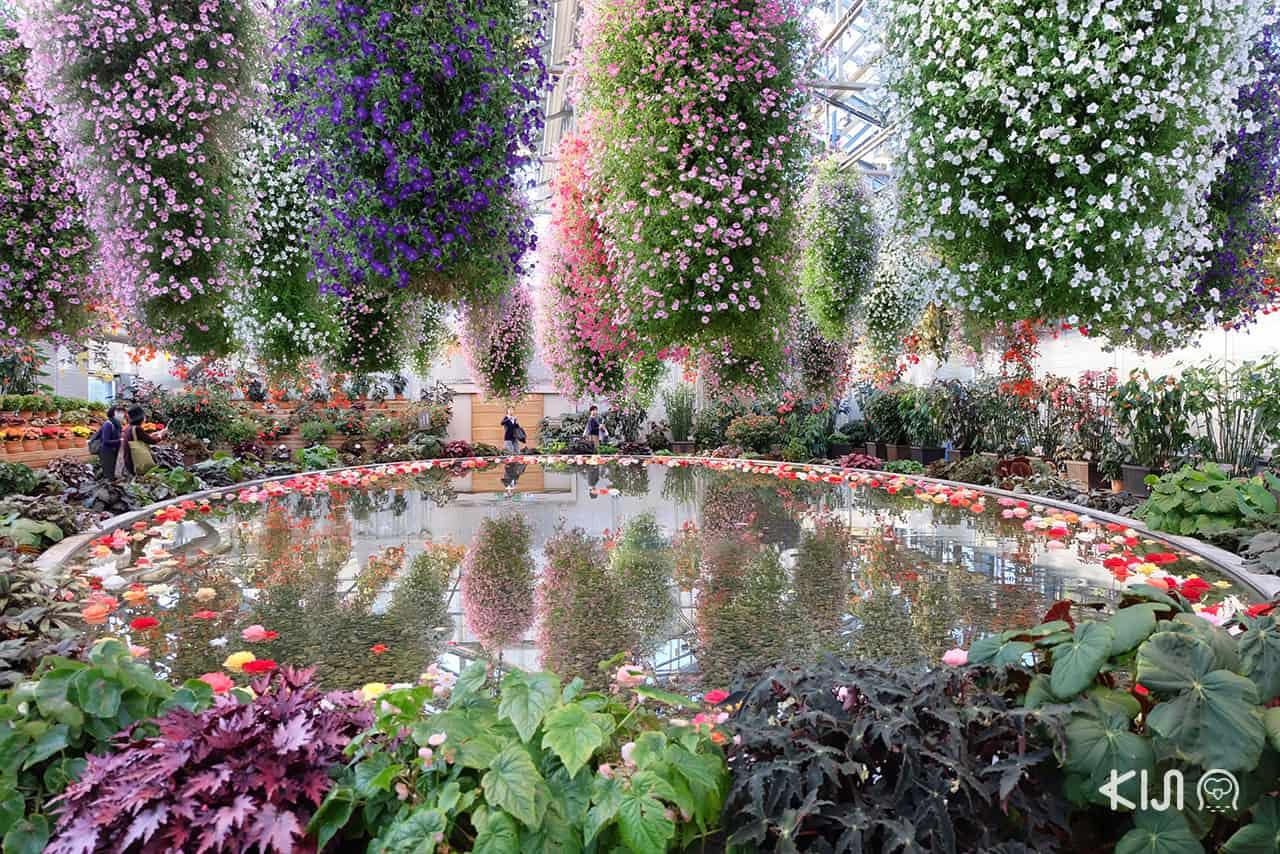 ทริป เที่ยว มิเอะ : ภายในสวน Begonia Garden