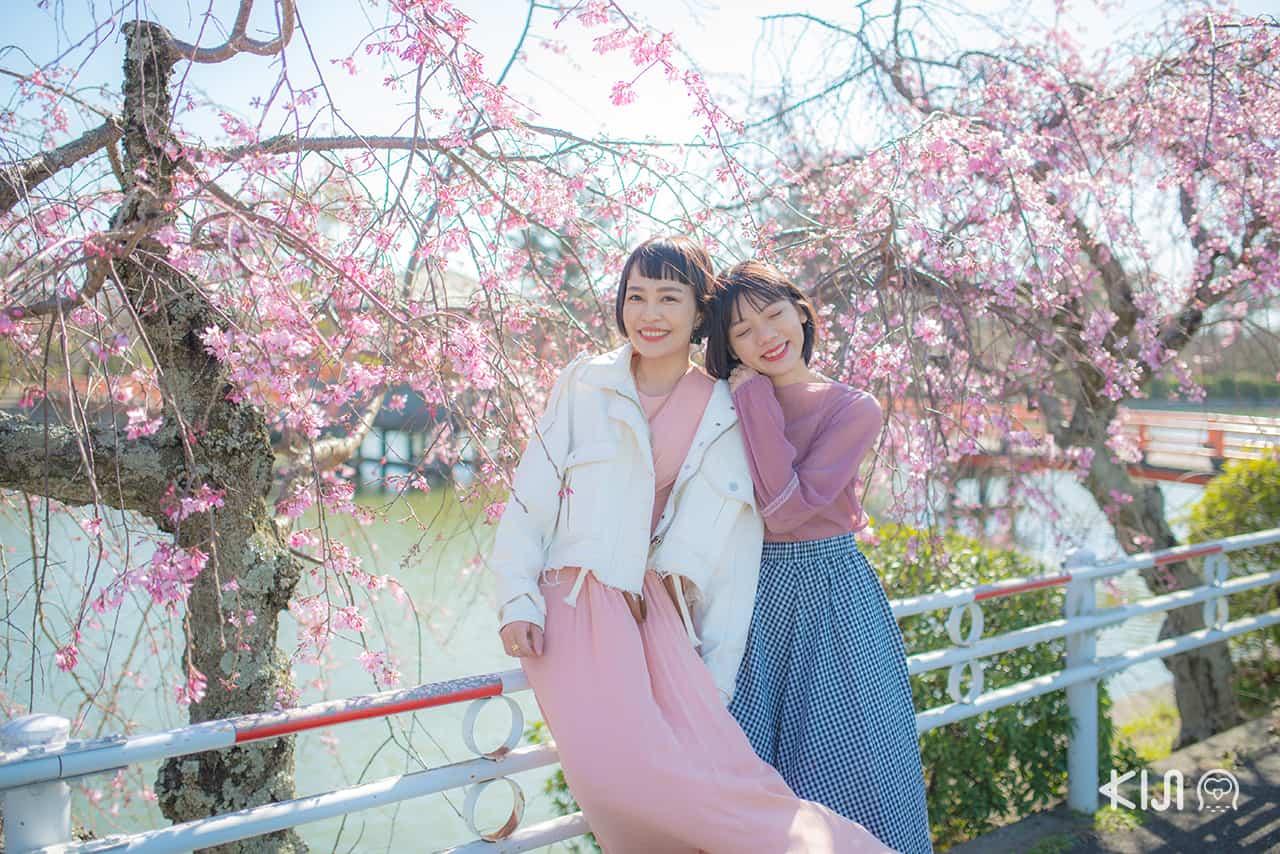 เที่ยว มิเอะ พร้อมชมซากุระที่ Kyuka Park