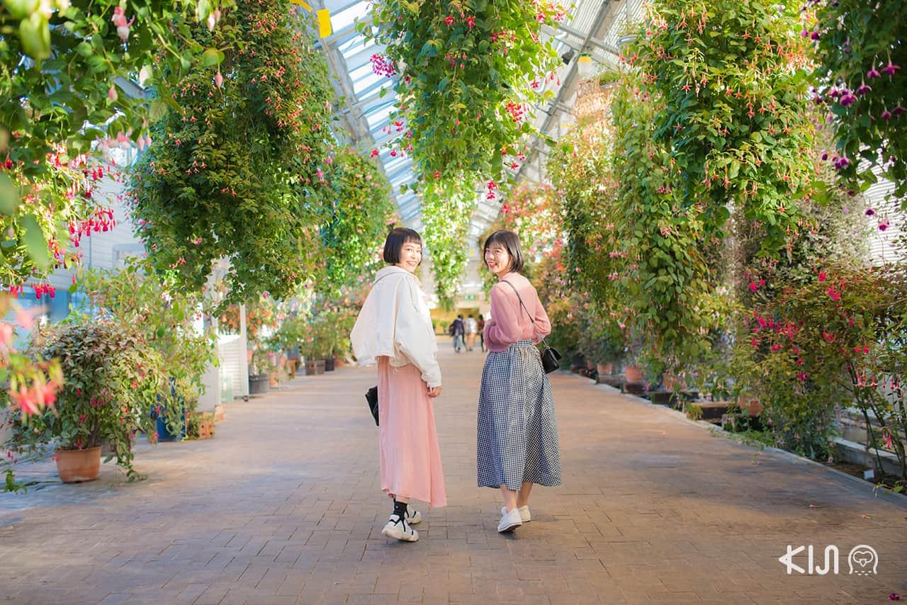 เที่ยว มิเอะ ที่ Begonia Garden