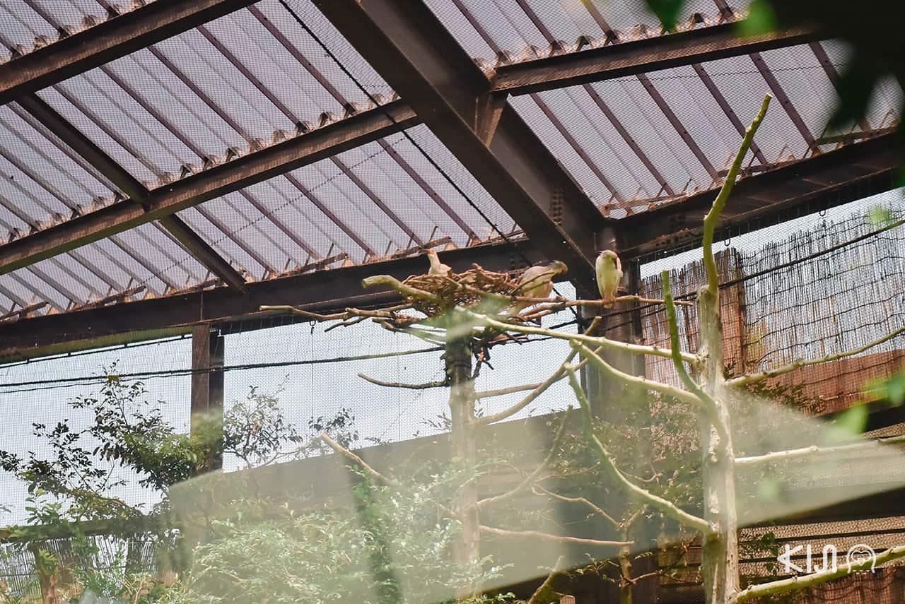 ศูนย์อนุรักษ์นกโทคิ (Toki) บน เกาะซาโดะ นกหายากที่เคยสูญพันธุ์ไปแล้วในญี่ปุ่น