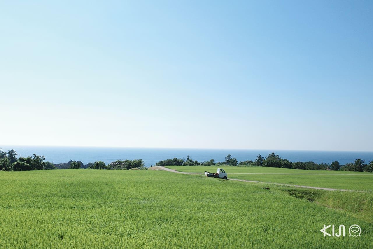เกาะซาโดะ (Sado Island) นอกจากจะล้อมรอบไปด้วยเขาและทะเล บางพื้นที่ยังตัดสลับกับทุ่งนาสีเขียว