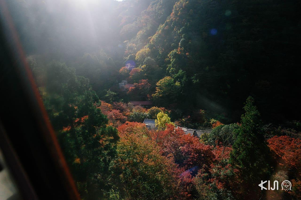 วิวใบไม้เปลี่ยนสีจากบนกระเช้าระหว่าง Mt.Rokko กับ Arima Onsen
