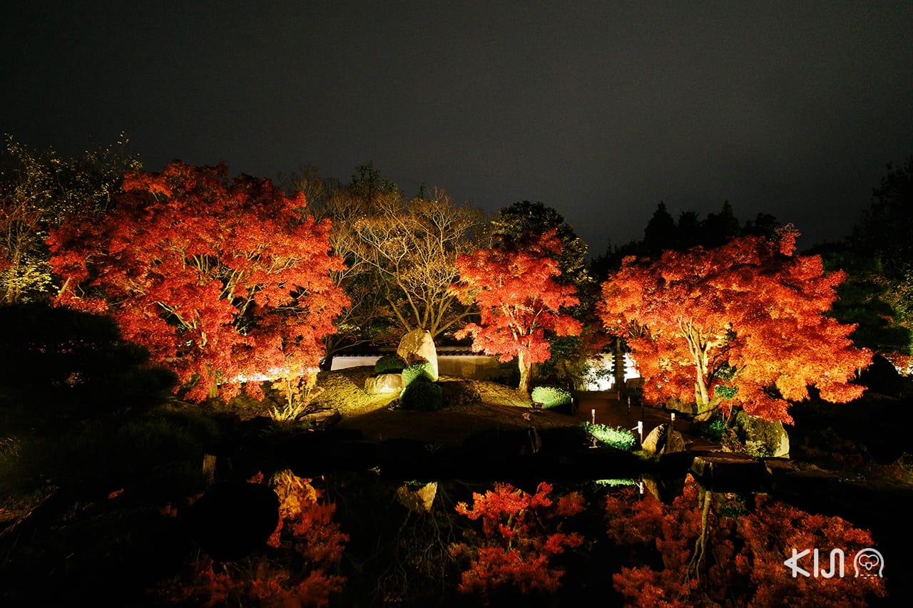 สวนสไตล์ญี่ปุ่นดั้งเดิมที่ตั้งอยู่ไม่ไกลกับปราสาท ฮิเมจิ ยามกลางคืนมีไลท์อัพในฤดูใบไม้ร่วง