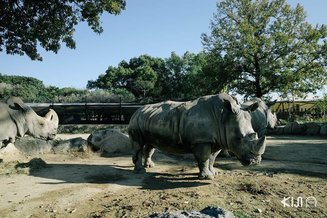Himeji Central Safari Park เป็นสวนสัตว์เปิดที่มีการเข้าชมหลายแบบทั้งขับรถเข้าไปเองหรือนั่งรสบัสซาฟารีในเมือง ฮิเมจิ