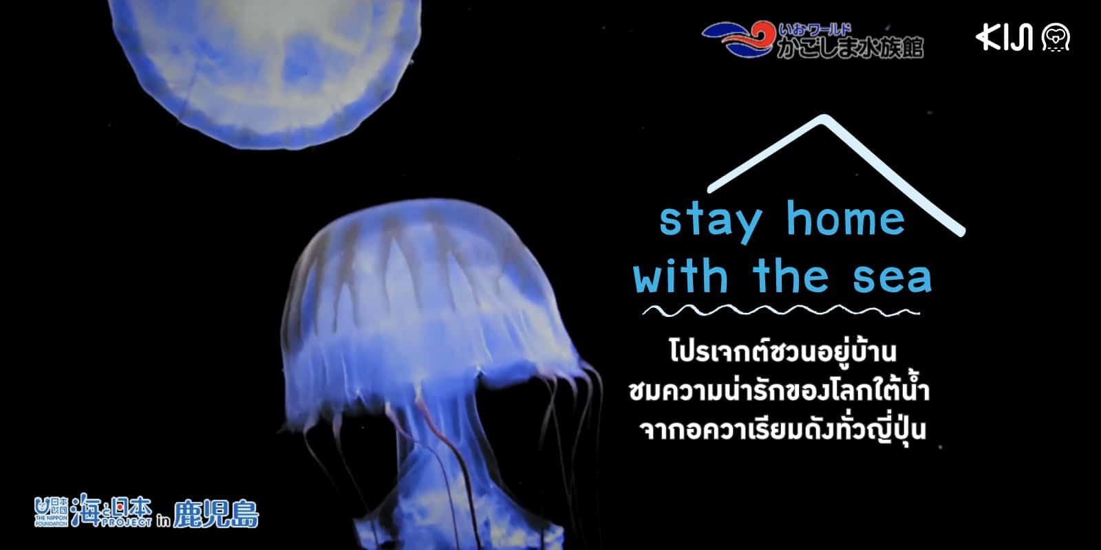 'stay home with the sea' โปรเจกต์ชวนอยู่บ้านชมความน่ารักของโลกใต้น้ำ ผ่านไลฟ์และวิดีโอจากอควาเรียมดังทั่วญี่ปุ่น