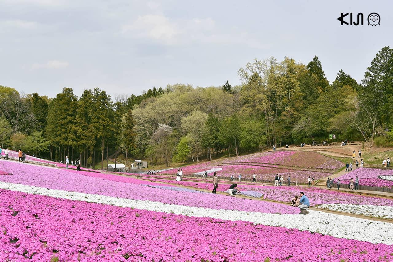 ที่เที่ยวไม่ไกลโตเกียว : สวนฮิสึจิยามะ (Hitsujiyama Park)