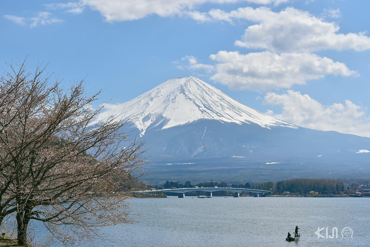 ที่เที่ยวไม่ไกลโตเกียว : ทะเลสาบคาวากุจิโกะ จ.ยามานาชิ