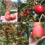 img-apple
