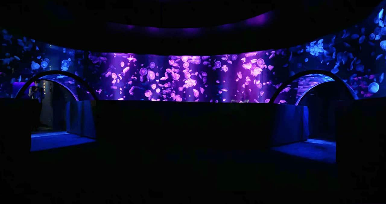 เอฟเฟกต์แสงสีในตู้แมงกะพรุนของ Kyoto Aquarium