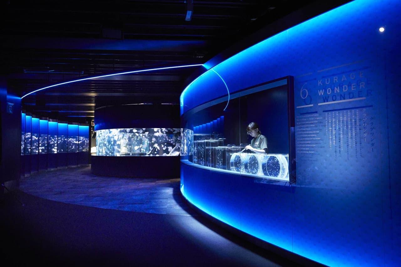 ๋Jellyfish Wonder โซนใหม่ของพิพิธภัณฑ์สัตว์น้ำเกียวโต ( Kyoto Aquarium )