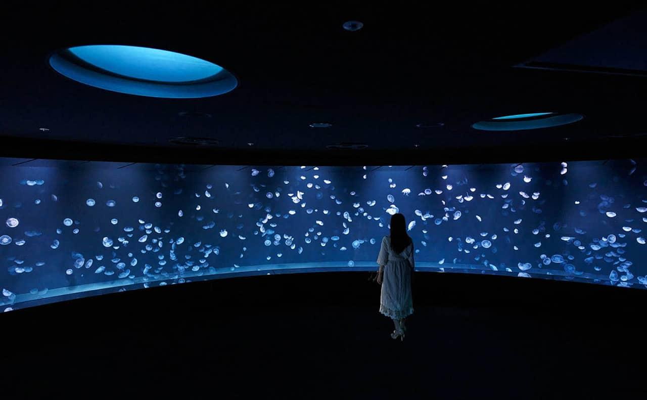 บริเวณโซน Kurage Panorma ภายใน Sunshine Aquarium