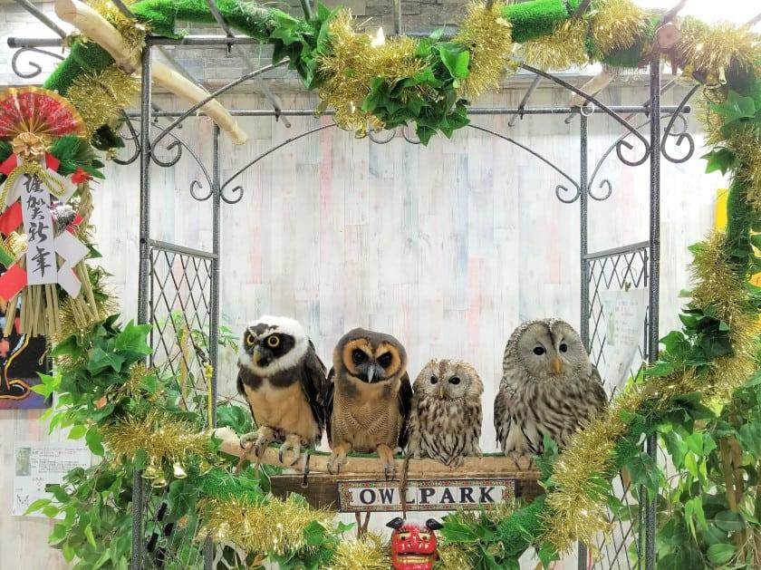 คาเฟ่เม่นแคระ (Hedgehog Cafe) ในโตเกียว : Owlpark