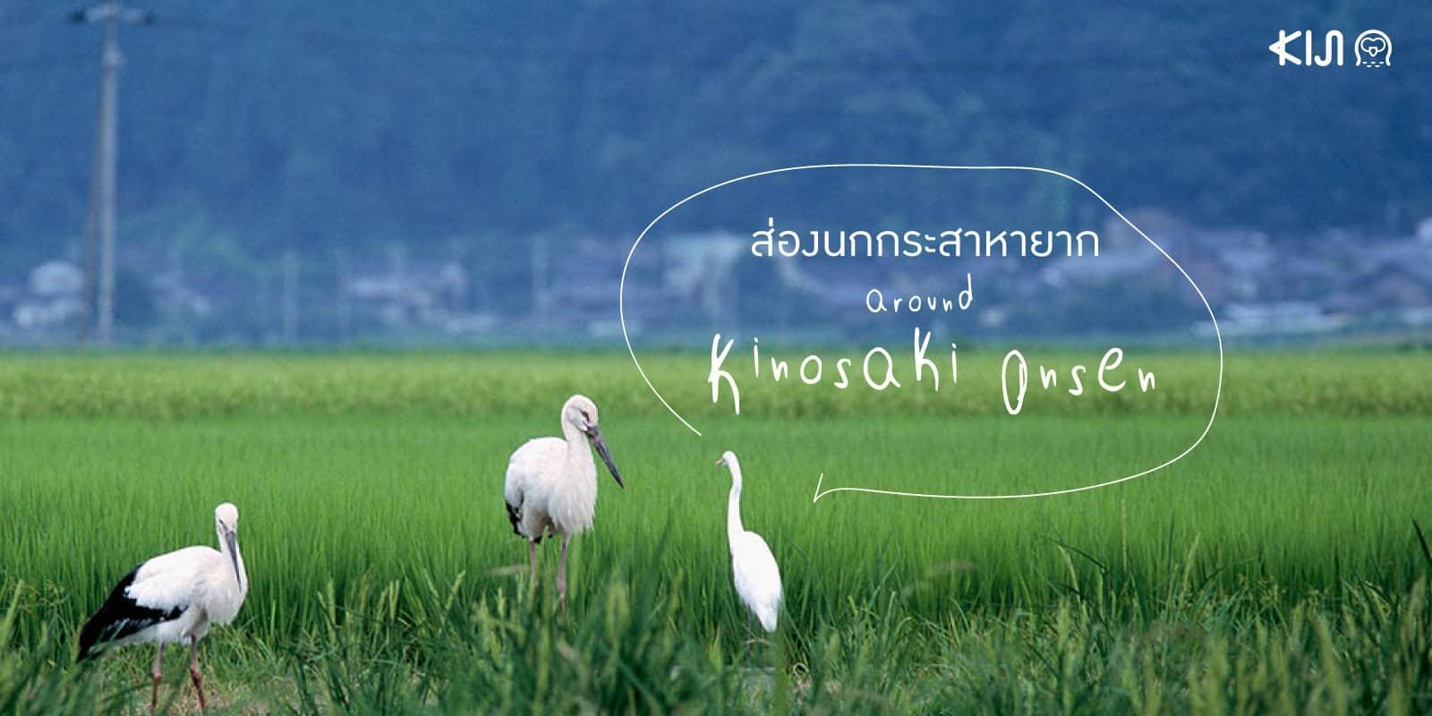 ส่อง นก คิโนะซากิออนเซ็น โทโยโอกะ