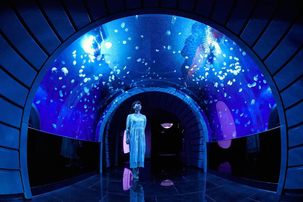 โซนนิทรรศการแมงกระพรุนของ Sunshine Aquarium