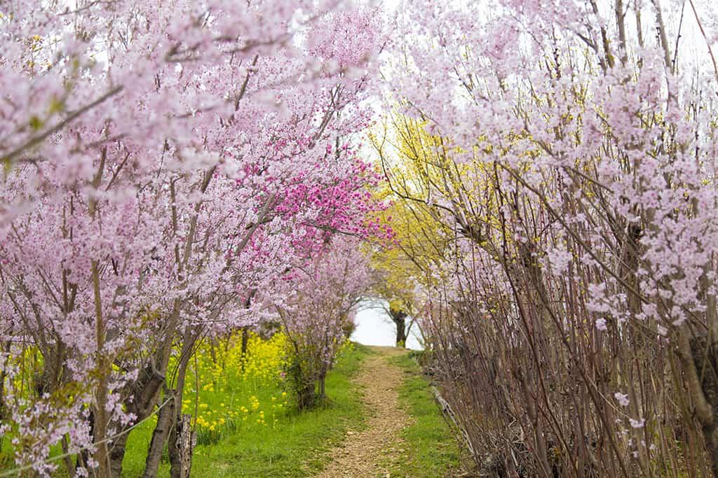 ผ่อนคลายในบรรยากาศที่สดชื่อของสวนดอกไม้ใน ฟุกุชิมะ