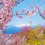 Hanamiyama 5 (Fukushima Prefecture)