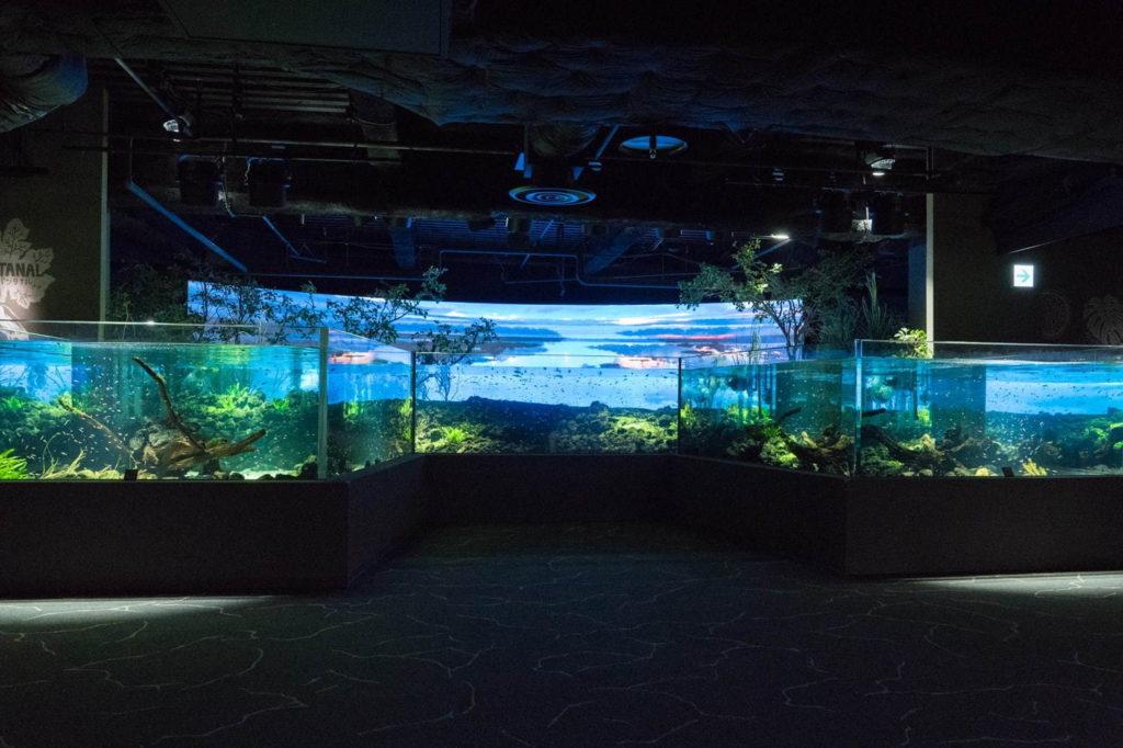 Kawasaki Aquarium