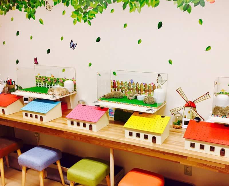 คาเฟ่เม่นแคระ (Hedgehog Cafe) ในโตเกียว : HAGU CAFE