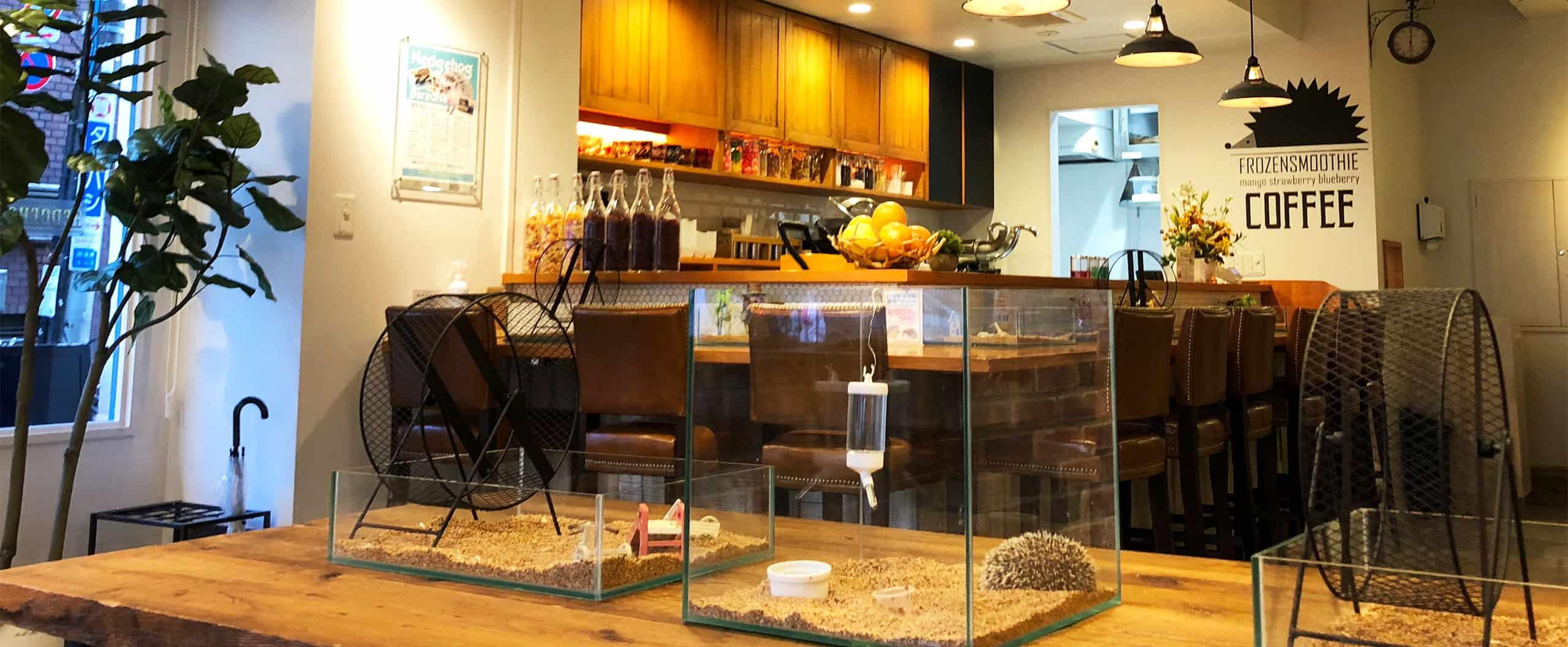 คาเฟ่เม่นแคระ (Hedgehog Cafe) ในโตเกียว : Harinezumi Paradise