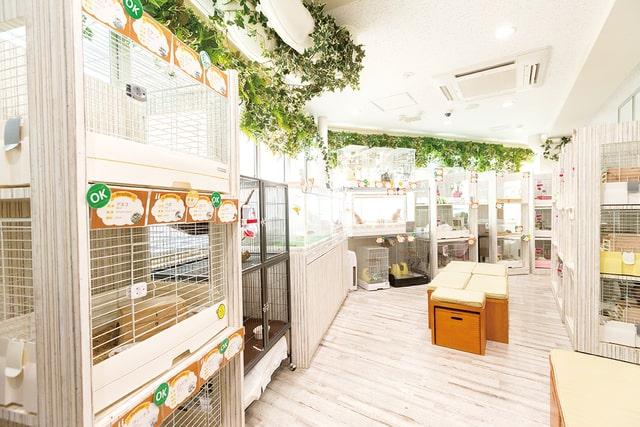 คาเฟ่เม่นแคระ (Hedgehog Cafe) ในโตเกียว : Animal Room Ikemofu