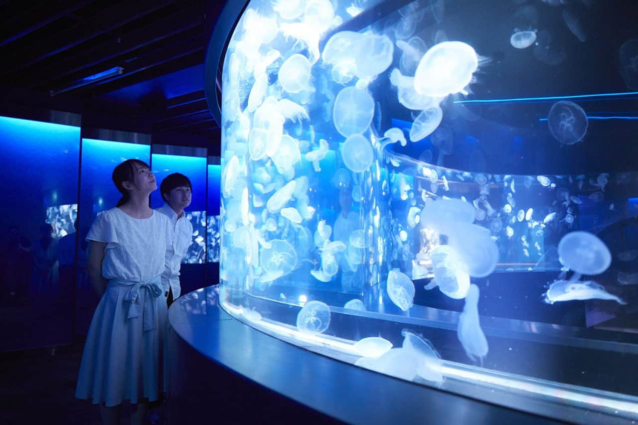 Jellyfish Wonder พื้นที่จัดแสดงแมงกะพรุน 5,000 ชีวิต ที่มีความหลากหลายถึง 20 สายพันธุ์ ภายใน Kyoto Aquarium จังหวัดเกียวโต
