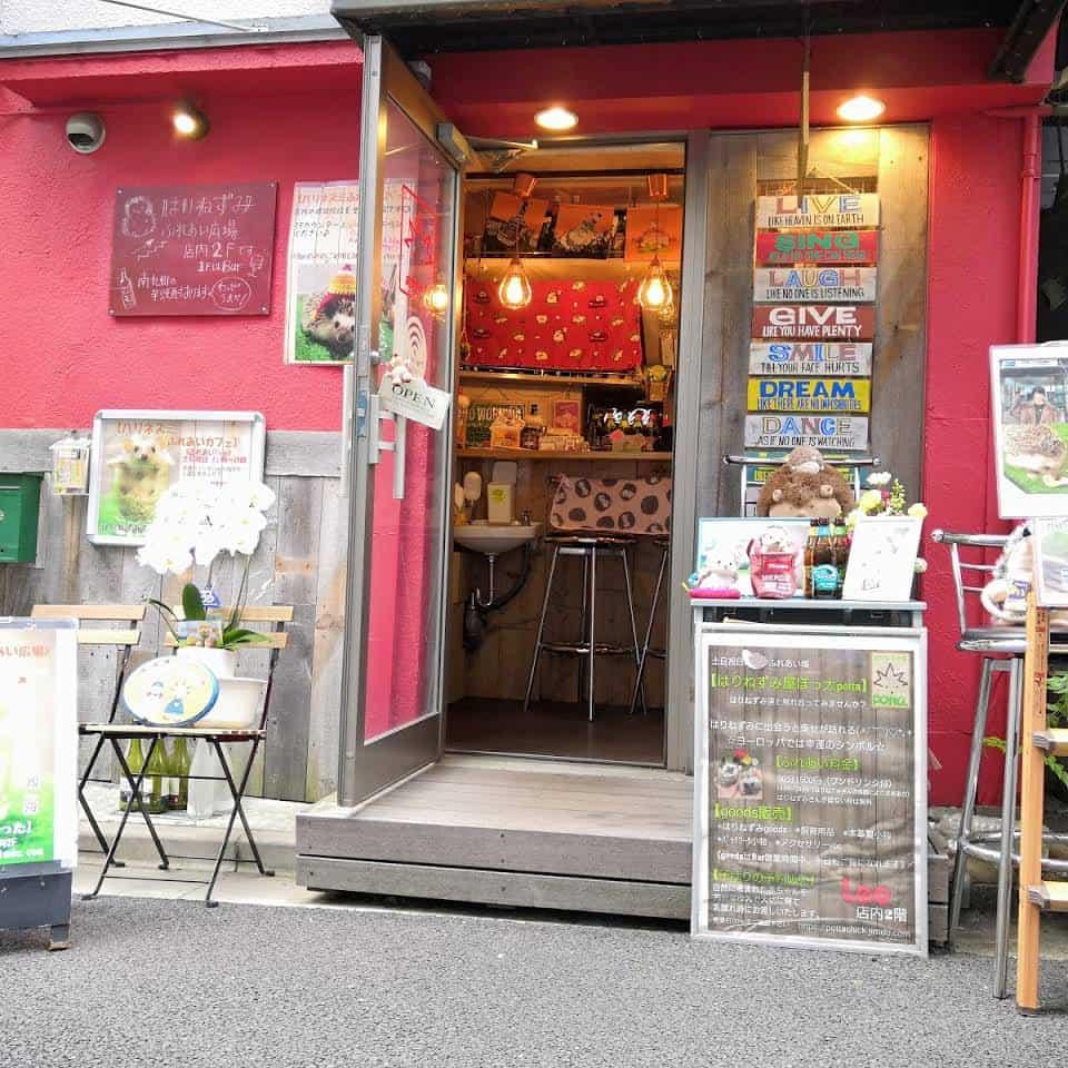 คาเฟ่เม่นแคระ (Hedgehog Cafe) ในโตเกียว : Harinezumi ya Potta