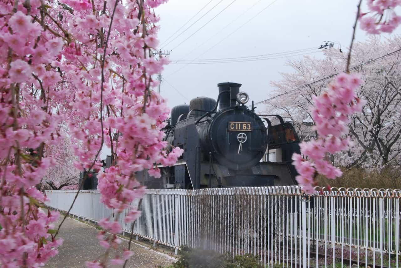 รถจักรไอน้ำโบราณที่จุดชมซากุระนิชชูเซน (Nicchusen Weeping Cherry Tree)