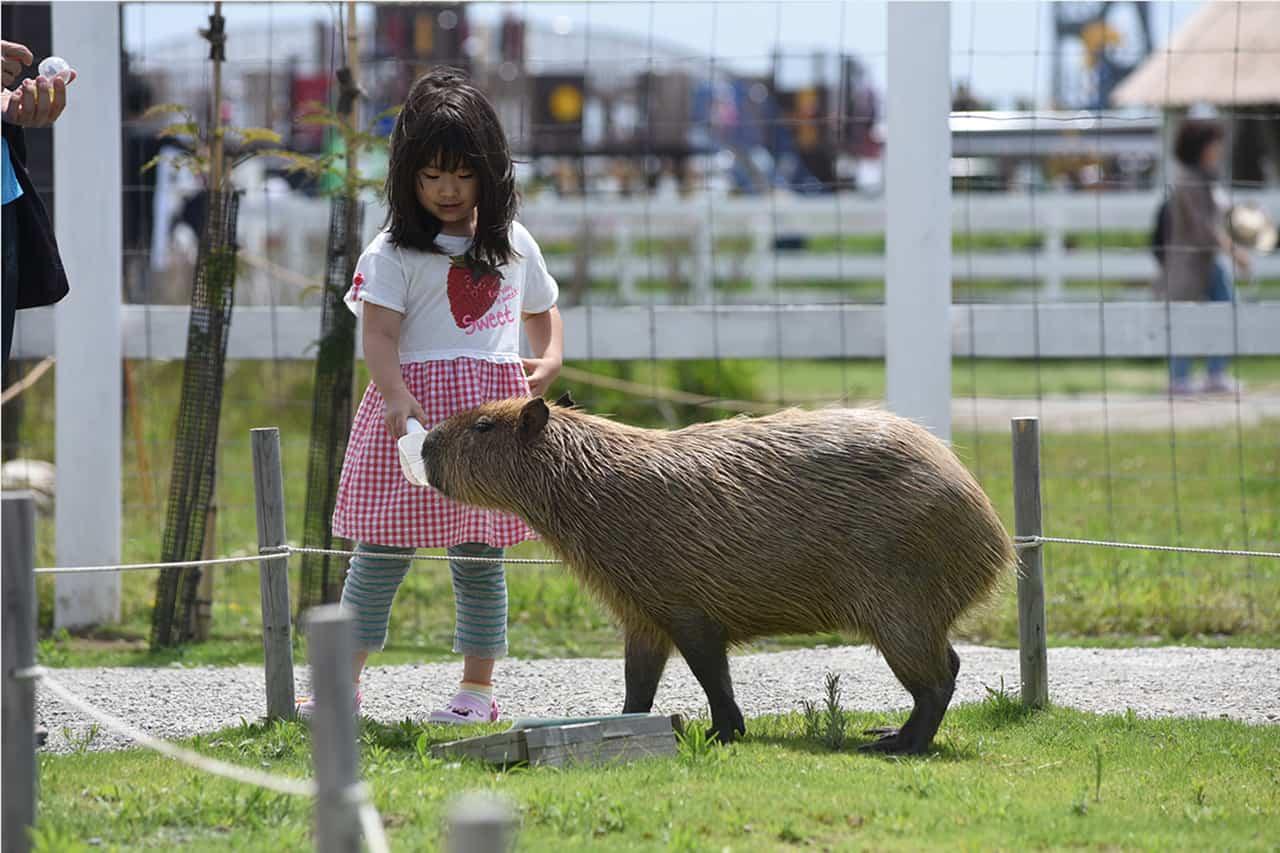 Yokosuka Soleil Hill เปิดโอกาสให้นักท่องเที่ยวไดด้สัมผัสกับสัตว์นานาชนิดอย่างใกล้ชิด